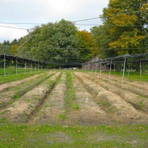 Plantfarm plot 1