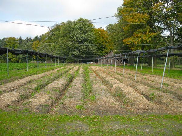 Parcelle Plantfarm 1